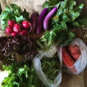 organic vegetable farm share