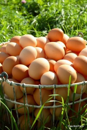 Pastire-Raised Eggs, 1 Dozen Weekly