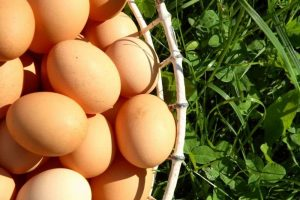 Pasture-Raised Eggs, 1/2 Dozen Weekly